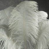 Ostrich Plumes.